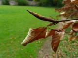 Autumn memories, spring promises