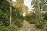 Leaf-strewn avenue