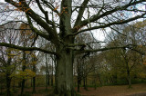 Regal tree