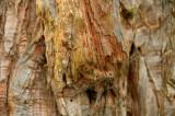 Spongy bark.jpg
