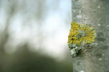 Knobbly young trunk 1.jpg