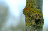 Knobbly young trunk 2.jpg