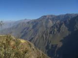 Condores en el Cañón del Colca