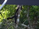 Gamboa. Isla de los Monos