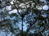 Monos en los árboles