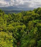 156 Rainforest Hanging Bridges.jpg