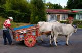 158 Oxen and cart 2.jpg