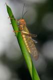 159 Locust.jpg