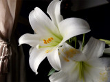 The Pollenator ~ March 28th
