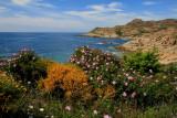 Corsica Cape.
