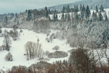 Vosges forest