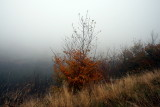 on a cold, windy and foggy morning.