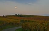 the vineyard by night