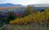 Wangen vineyard