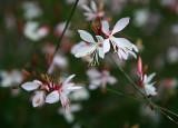 les dernières fleurs de  mon jardin.