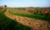 vineyard in Westhoffen