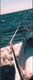 7.9 kts downwind on Lake Simcoe