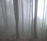 Misty mountain walk.