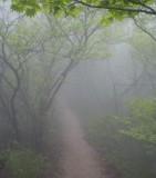 Mountain rigde path.