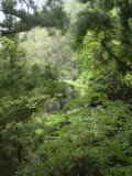 Woods near Fukuoka