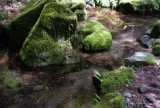 Mossy pool.