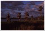 North Florida Lake