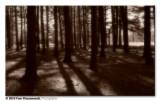 Artsy trees ...