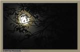 À la pleine lune j'irai m'asseoir ...