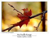 My Red Leaf ...