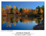 The Natural Mirror