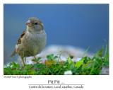 Summer Bird  :-)