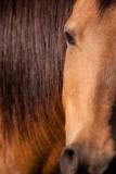 Horse Sense  ~  May 28