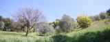 Near Tanneron