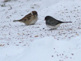 Birdtrip to Norway 2010