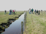 Marsh Sandpiper just between two regions.