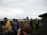 Sharp-tailed Sandpiper, twitchers