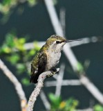 nature center humming bird.jpg