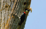nature center wood peckers.jpg
