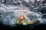 Australian Seabird Rescue-Recue,Rehabilitate and Release-