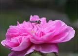 Bug on James Mitchell