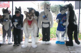 Fursuit Parade