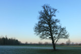 January 4 2010: A Tree in Winter