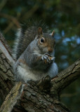 April 17 2010: Nuts About Nuts!