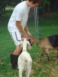Goats 038.jpg