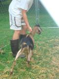 Goats 037.jpg