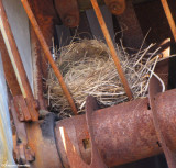 American robin nest in farm machinery