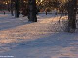 Winter:  Best of