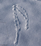 Animal Tracks and Signs (5 Galleries)