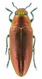 Mostly beetles
