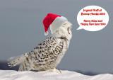 Joyeuses Fêtes / Happy Holidays